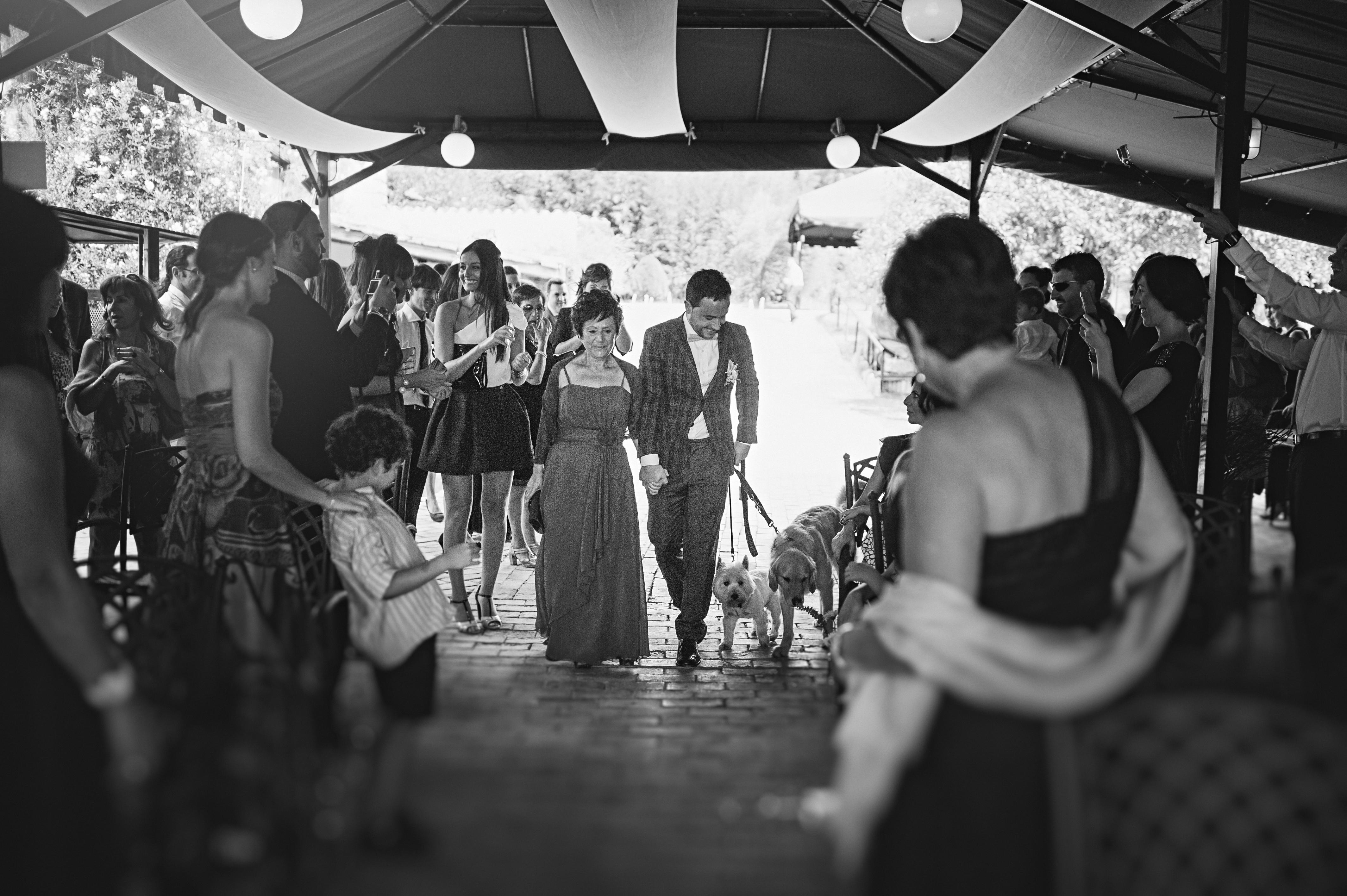 perros boda civil aspaldiko