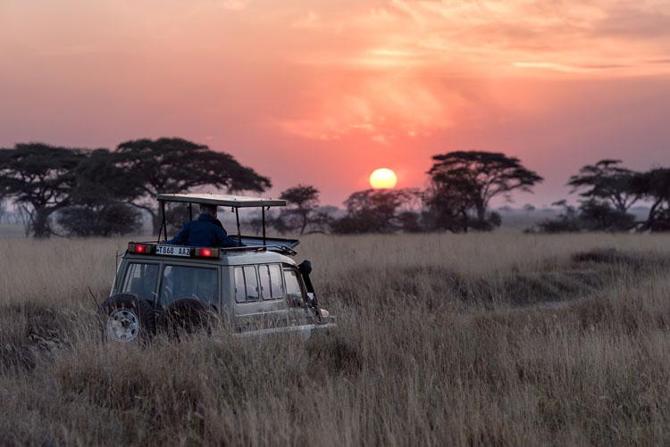luna de miel 2021 covid, safari